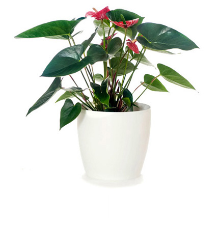 Indoor Pot Plants