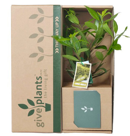 Give Plants for any occasion from Corporate Gifts to birthday gifts