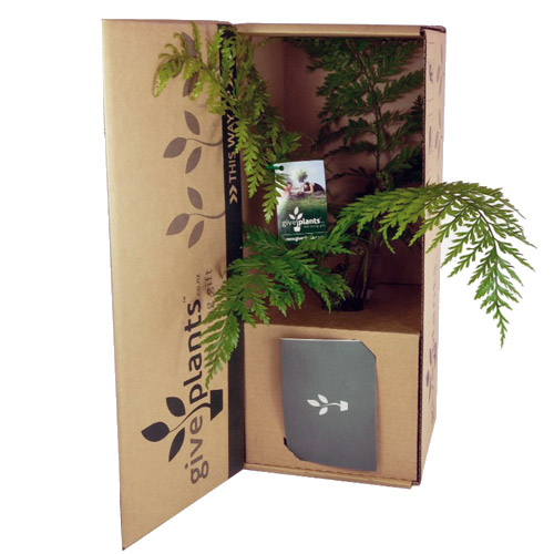 Corporate gift ideas corporate gifts new zealand nz for Indoor plant gift ideas